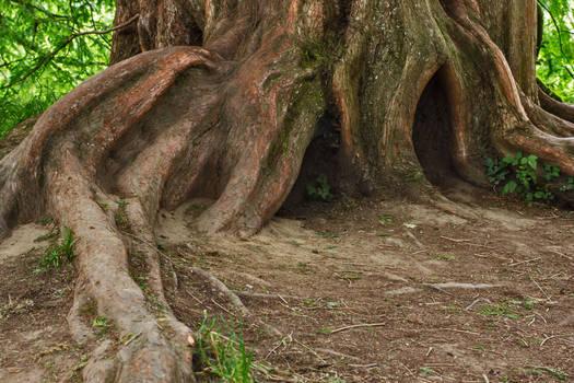 tree trunk 15