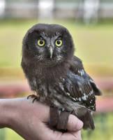 Owl Stock 09