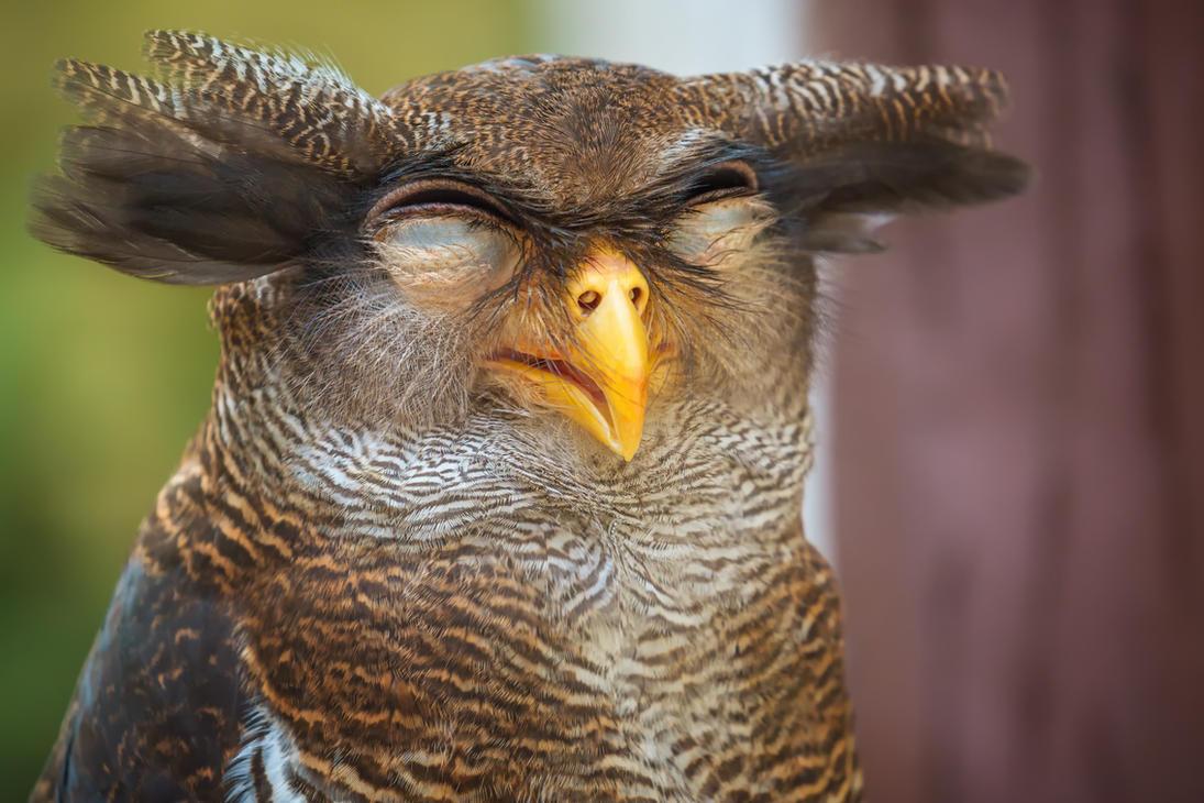 Bird (21) by duzulek