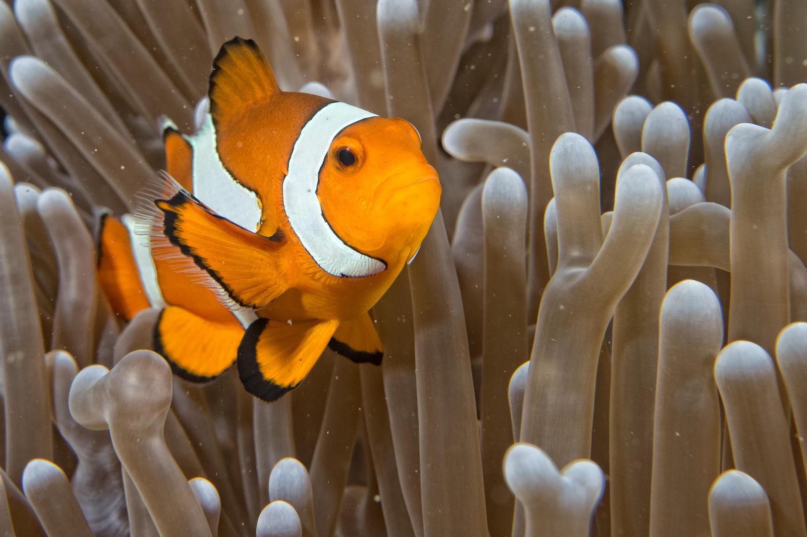 Sea-fish (7) by duzulek