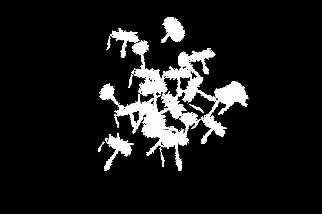 Dandelion 29 by duzulek