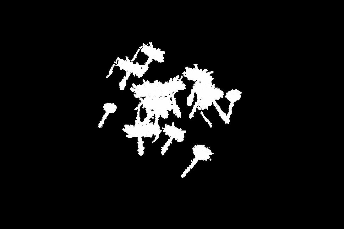 Dandelion 33 by duzulek