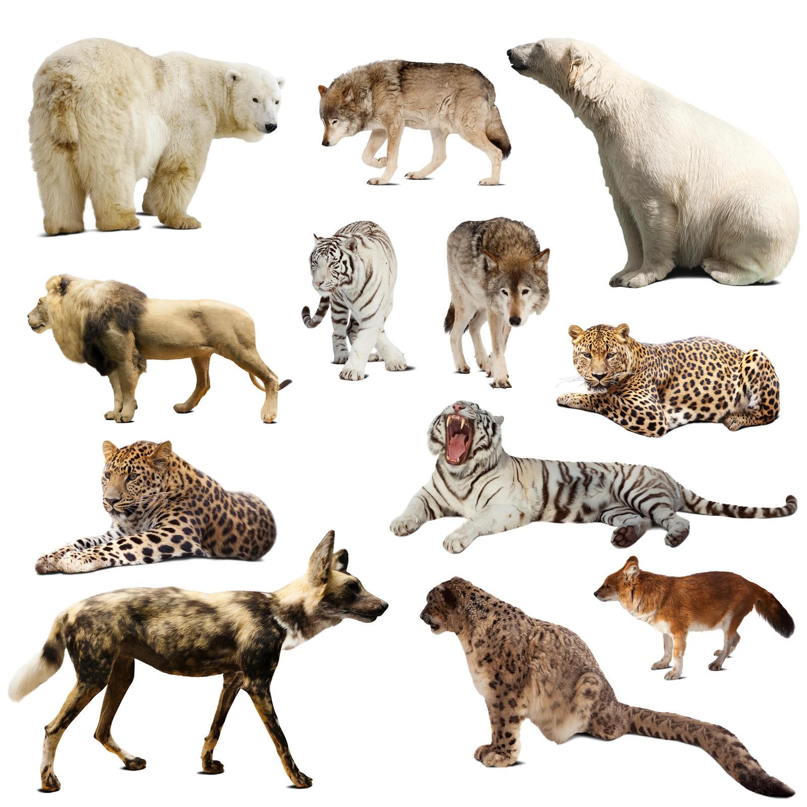 Animals set isolATED WHITE bg (1)