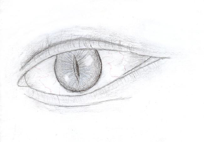 Reptile Eye Drawing
