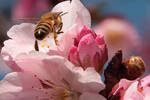 Reflection 0n A Bee-hind by Mac-Wiz