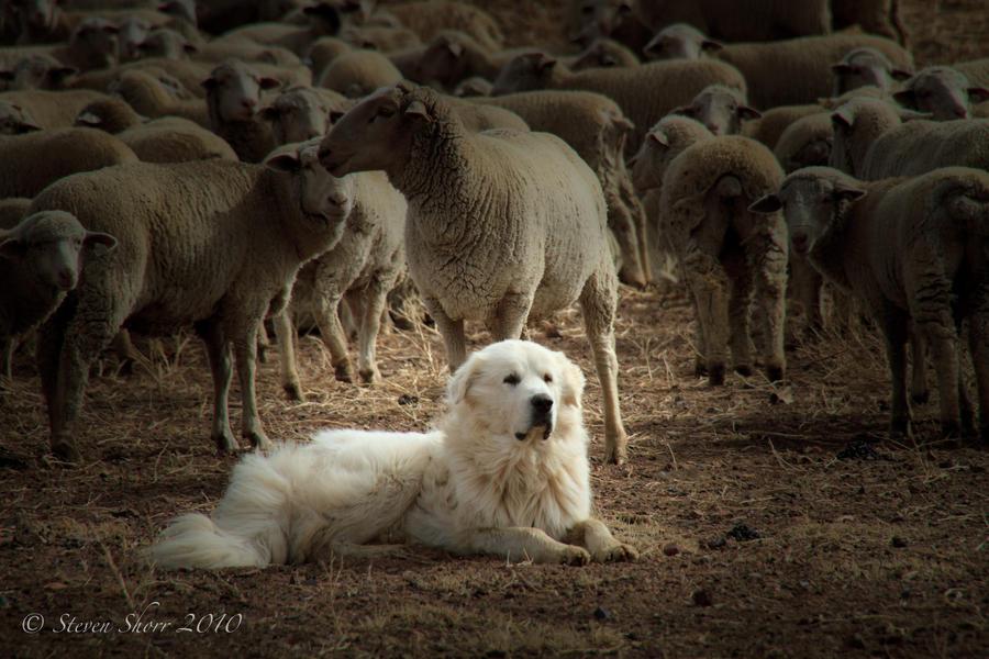 My Flock by Mac-Wiz