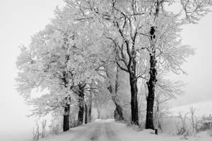 Snow Path by DamianMekal