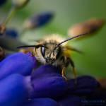 Among the Wildflowers II