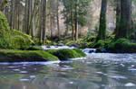 silver stream through blackforest green