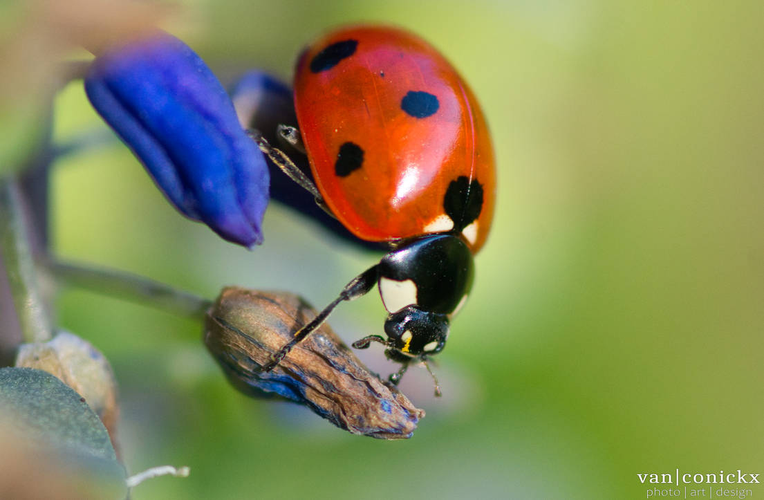 A Curious Ladybug
