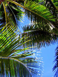 Palm Trees by chinotenshi