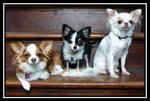 Mia, Oliver and Cleo