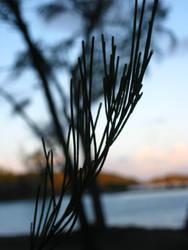 Leaf by KaiGlint