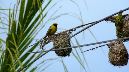 Bird on a nest by KaiGlint