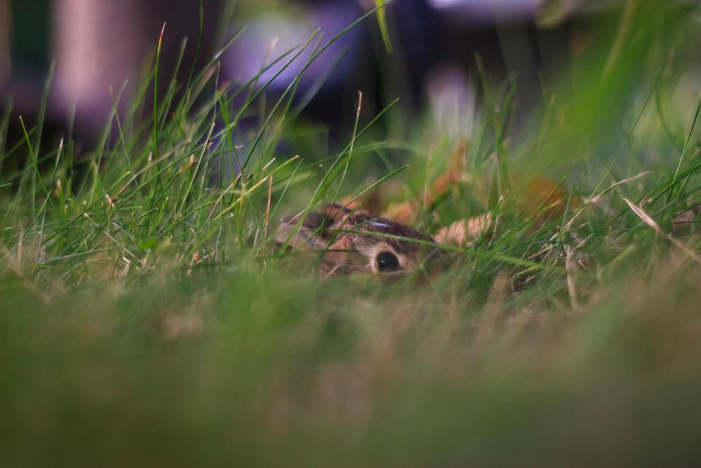 Mr Bunny Rabbit by Ryan-Warner