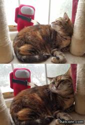 Among Us Plush vs Sus Kitty