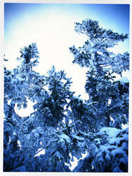 A Postcard from Winter