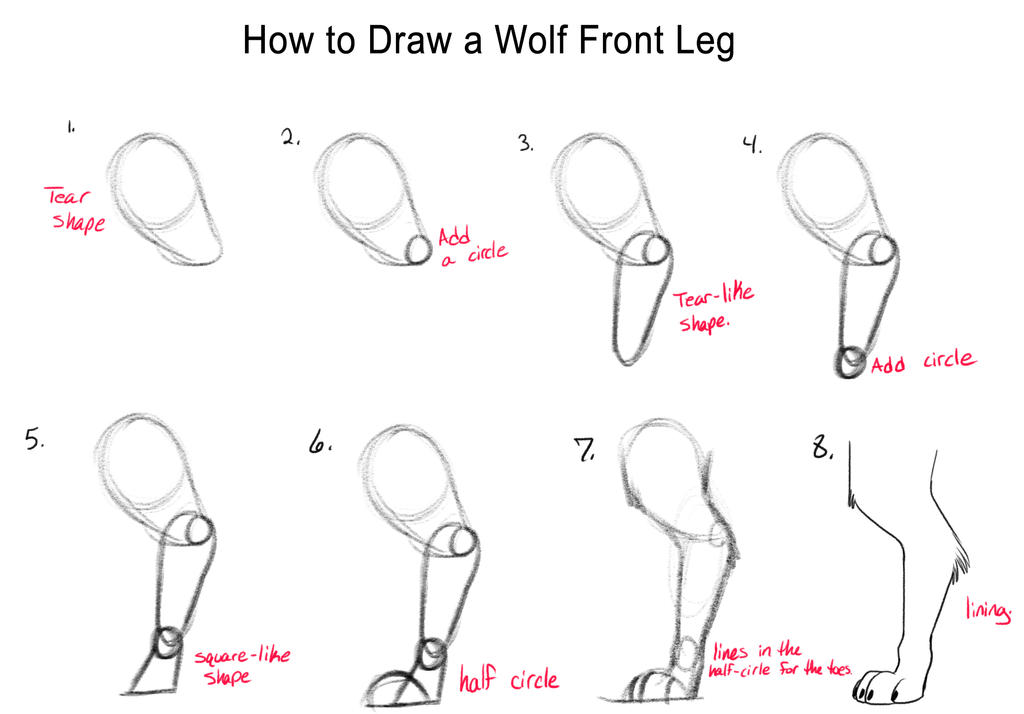 How to draw a wolf front leg by darleenethegenie