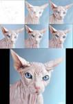 cat making of