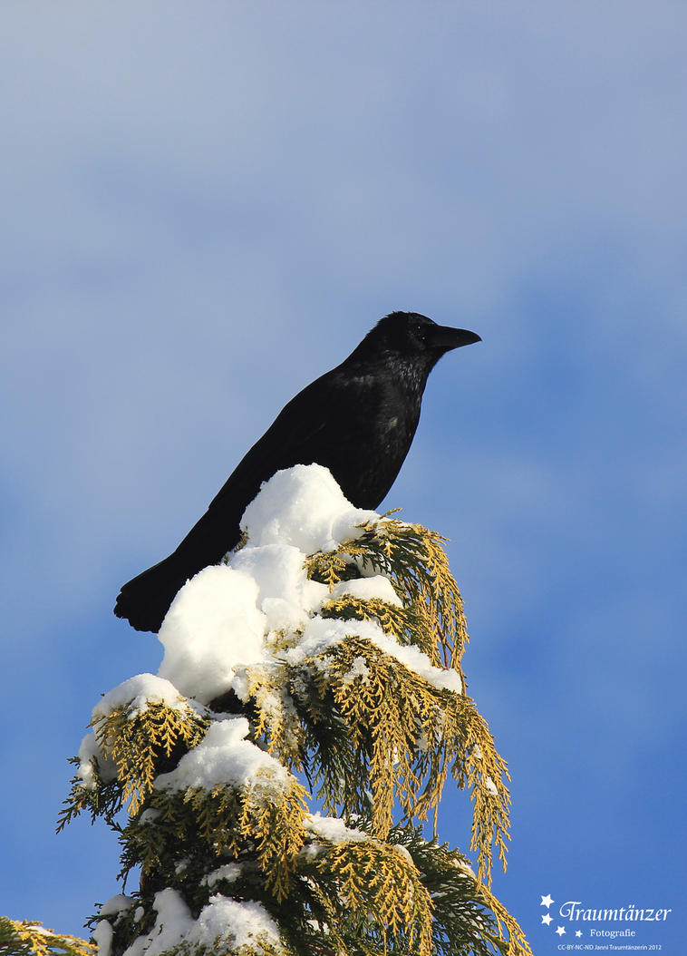 The Crow by JanniTraumtaenzerin