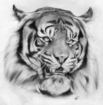 Joao the Tiger