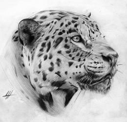 Scarface the Jaguar