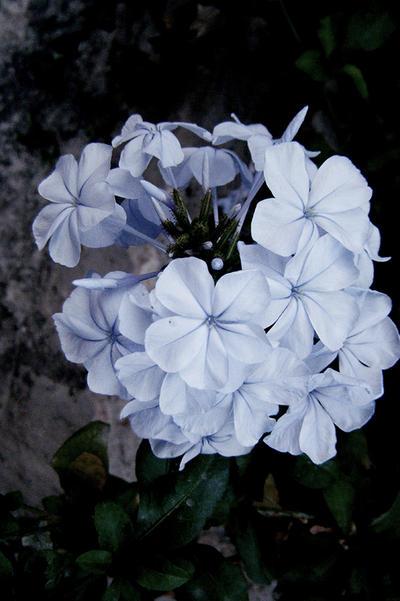 Flowers II by becksrm
