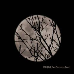 Full Moon, Spring Twigs