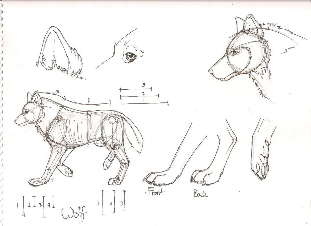 Wolf Paw Anatomy