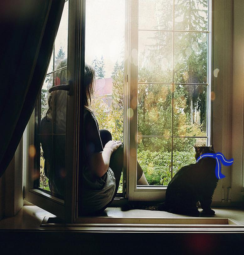 Alone, animal, cat, girl, waiting, window - image #23586 on .