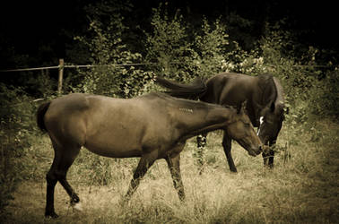 Two horses by noiser84