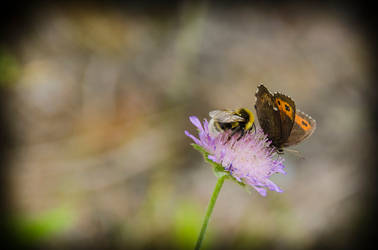 Butterfly and bumblebee on a flower by noiser84