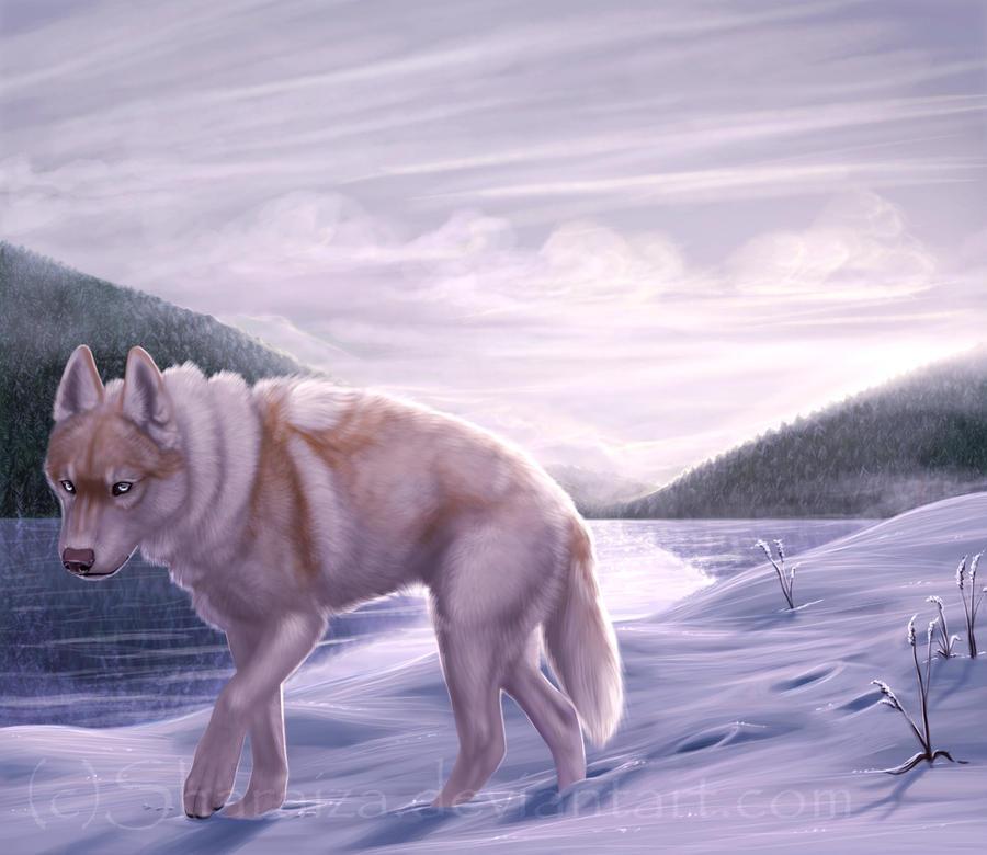 Wild by Sharaiza