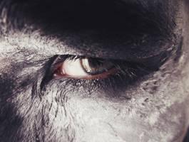 Beast by Dan-Heffer