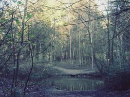 Forest I by Dan-Heffer