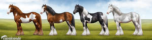 Cavalcando - Gypsy Vanner - colours and patterns