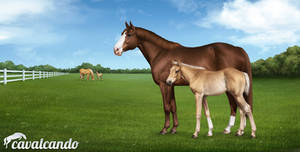 Cavalcando - American Quarter Horse