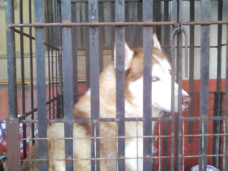 isis the big fluffy doggie by babaengecchi