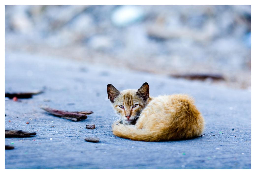Cat 1 by flemmens