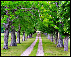 Trees Alley by grenouille-enchantee