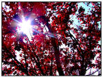 Sun in the Red Tree