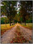 Trees Alley - Autumn