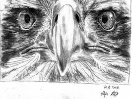 Eagle by grini