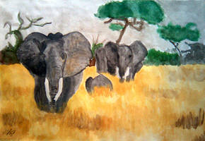 Elephants in Tanzania by grini