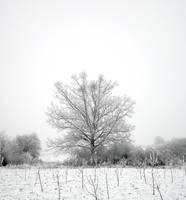 Frozen by grini