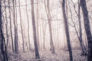 Forest 1 by grini
