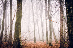 Forest 2 by grini