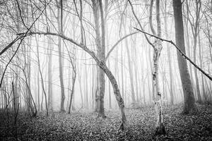 Forest 3 by grini