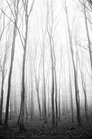 Forest 5 by grini