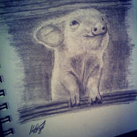 Piglet by grini